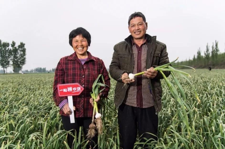 拼多多的成长轨迹:与中国农业高速发展一路同行